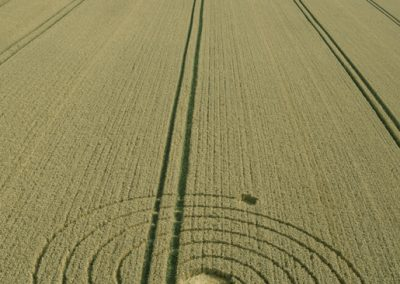Penning nr Silbury Hill, Wiltshire | 8th August 2013 | Wheat L3