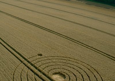 Penning nr Silbury Hill, Wiltshire | 8th August 2013 | Wheat L4