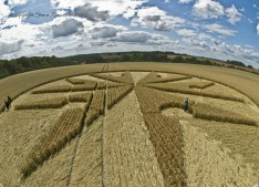 Chute Causeway nr Tidcombe, Wiltshire | 10th August 2013 | Wheat P3
