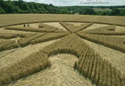 Chute Causeway nr Tidcombe, Wiltshire | 10th August 2013 | Wheat P4