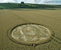 Hackpen Hill (2), Wiltshire | 11th August 2013 | Wheat L