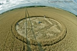 Hackpen Hill (2), Wiltshire | 11th August 2013 | Wheat P