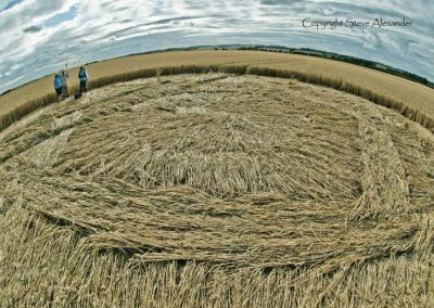 Hackpen Hill (2), Wiltshire | 11th August 2013 | Wheat P3