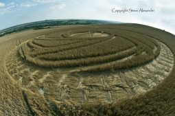 Etchilhampton Hill, Wiltshire | 19th August 2013 | Wheat P4