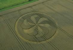 Marden Henge, Wiltshire | 23rd August 2013 | Wheat L