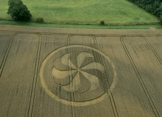 Marden Henge, Wiltshire | 23rd August 2013 | Wheat L2