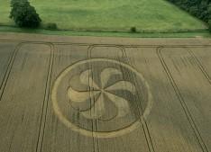 Marden Henge, Wiltshire | 23rd August 2013 | Wheat L2
