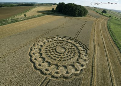 Hackpen Hill 2 (Stage 2), Wiltshire | 31st August 2013 | Wheat LAD