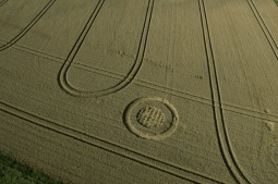 The Ridgeway, nr Hackpen Hill, Wiltshire | 6th August 2014 | Wheat | L2