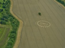 Nettle Hill, nr Ansty, Warwickshire | 16th August 2014 | Wheat L4