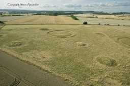 Ackling Dyke (2), nr Sixpenny Hadley, Dorset | 22nd August 2014 | Wheat BLO