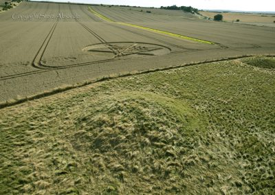 Ackling Dyke (2), nr Sixpenny Hadley, Dorset | 22nd August 2014 | Wheat BL