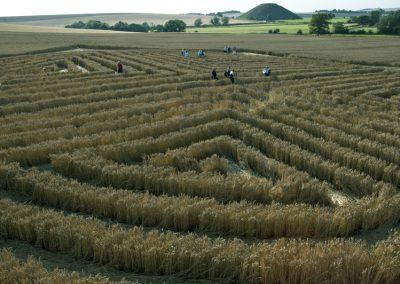 West Kennett, Wiltshire | 30th July 2004 | Wheat P3