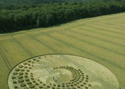 Forest Hill nr Marlborough, Wiltshire   16th July 2014   Wheat   L4