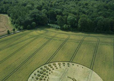 Forest Hill nr Marlborough, Wiltshire   16th July 2014   Wheat   L3