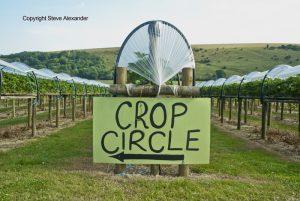 latest crop circle