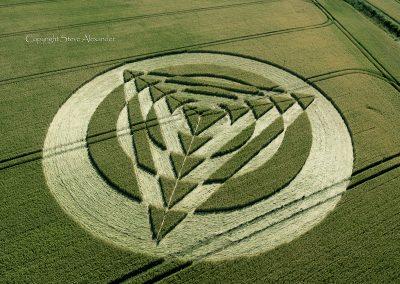 Tetbury Lane nr Charlton, Wiltshire UK   8th July 2014   Wheat   OH2