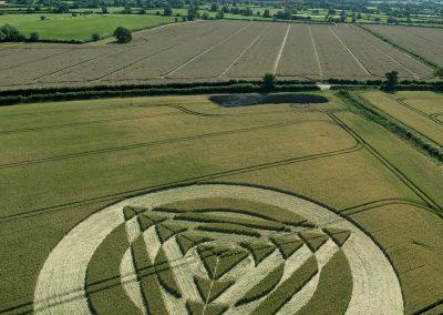 Tetbury Lane nr Charlton, Wiltshire UK   8th July 2014   Wheat   L