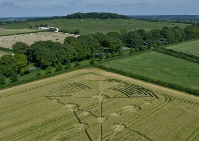 Badbury Rings, nr Wimborne Minster, Dorset   17th June 2014   Barley   L6
