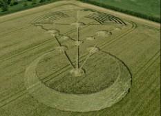 Badbury Rings, nr Wimborne Minster, Dorset | 17th June 2014 | Barley | L6