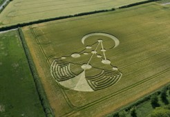 Badbury Rings, nr Wimborne Minster, Dorset | 17th June 2014 | Barley | L7