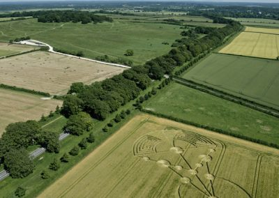 Badbury Rings, nr Wimborne Minster, Dorset   17th June 2014   Barley   L8