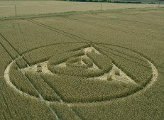 Etchilhampton Hill, Wiltshire | 27th July 2014 | Wheat | L