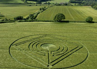 Hod Hill, Hanford, Dorset | 1st June 2014 | Barley | L