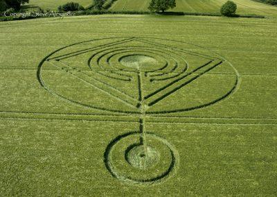Hod Hill, Hanford, Dorset | 1st June 2014 | Barley | L5