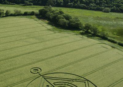 Hod Hill, Hanford, Dorset | 1st June 2014 | Barley | L6