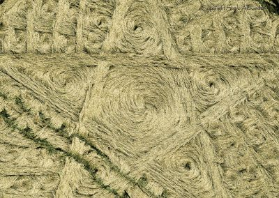 Parkes Hill Plantation, nr Cherington, Gloucestershire | 27th July 2014 | Wheat | CL