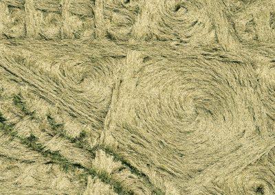 Parkes Hill Plantation, nr Cherington, Gloucestershire | 27th July 2014 | Wheat | CL2