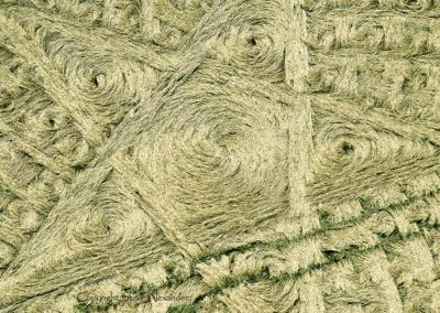 Parkes Hill Plantation, nr Cherington, Gloucestershire | 27th July 2014 | Wheat | CL3