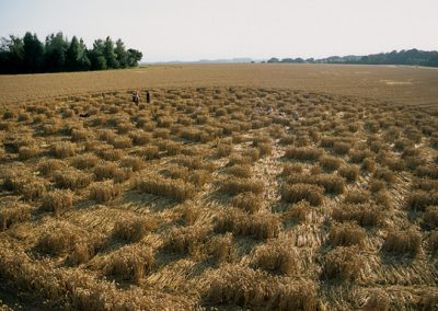 Sparsholt Nr Winchester, Hampshire | 15th August 2002 | Wheat P 35mm