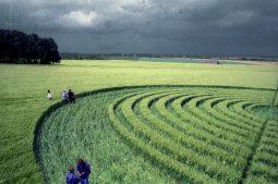Beckhampton, Wiltshire | 29th May 1995 | Barley | P3 35mm Neg Scan
