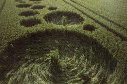 Bishops Sutton, Hampshire | 20th June 1995 | Wheat | P4 35mm Neg Scan