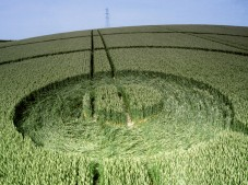 Cowdown, nr Andover, Hampshire | 18th June 1995 | Wheat | P 35mm Neg Scan