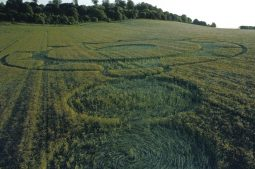 Danebury Hillfort, Hampshire | 16th June 1995 | Barley | P 35mm Neg Scan