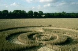 Exton, Hampshire | 21st  July 1995 | Wheat | P3 35mm Neg Scan