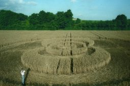 Exton, Hampshire | 21st  July 1995 | Wheat | P4 35mm Neg Scan