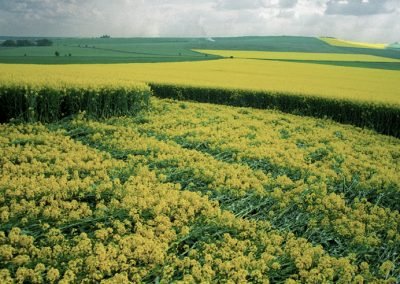 Furze Knoll, Wiltshire | 7th May 1994 | Oilseed Rape GS2 35mm Neg Scan
