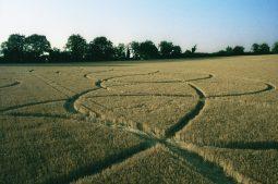 Goodworth Clatford, Hampshire | 22nd July 1995 | Barley | P2 35mm Neg Scan