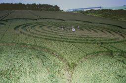 Litchfield, Hampshire | 6th July 1995 | Wheat | P 35mm Neg Scan