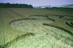 Litchfield, Hampshire| 6th July 1995 | Wheat | P3 35mm Neg Scan