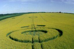 Quidhampton, Hampshire | 11th May 1995 | Oilseed Rape | P 35mm Neg Scan