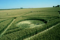 Winterbourne Bassett, Wiltshire | 23rd July 1995 | Wheat | P2 35mm Neg Scan