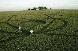 Winterbourne Bassett, Wiltshire | 23rd July 1995 | Wheat | P3 35mm Neg Scan
