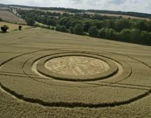 Trodds Copse, nr Tichborne, Hampshire | 4th August 2014 | Wheat | L