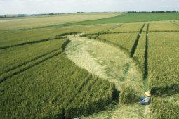 Avebury Down, Wiltshire   16th July 2000   Wheat P2 35mm