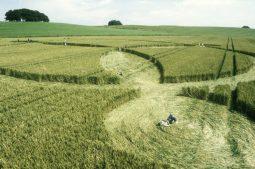 Avebury Down, Wiltshire 16th July 2000   Wheat P 35mm